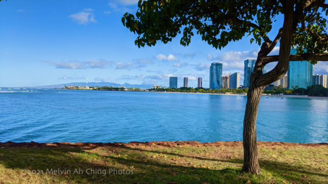 Morning Serenity in urban Honolulu